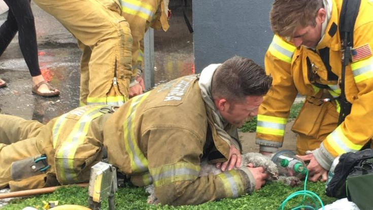 Like humans, animals are susceptible to suffering breathing issues from smoke inhalation when escaping a house fire. And like humans, emergency care with the proper equipment is critical to saving lives. Unfortunately, when animals need to be resuscitated or receive clean oxygen, the tools aren't always available.