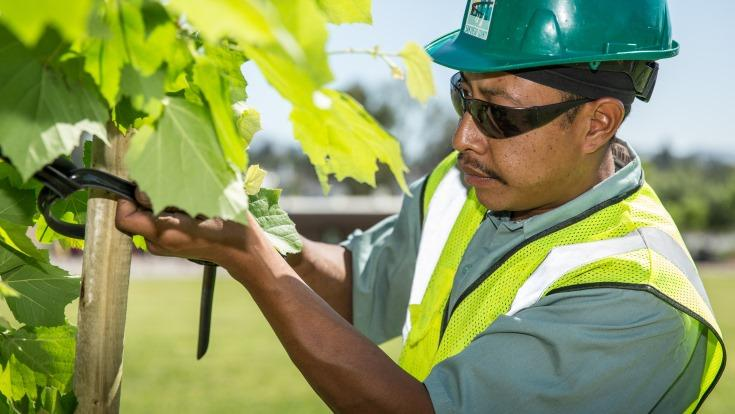 What you may not realize is here at SDG&E we have a team of vegetation management professionals who work every day to maintain the trees that grow near San Diego's power grid.