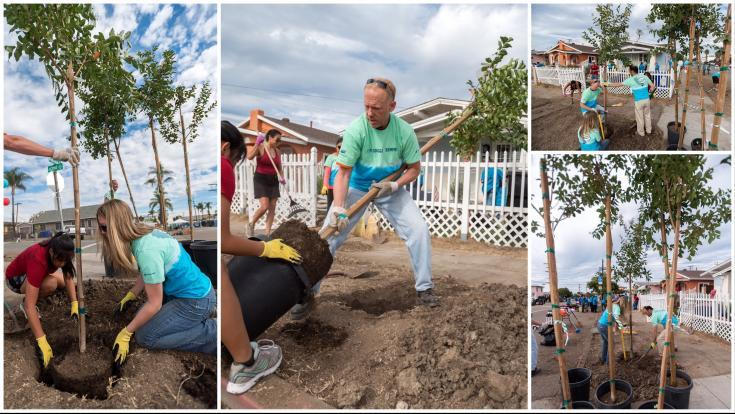 Today, many Americans will take action to improve their communities by planting a tree in support of the Arbor Day Foundation's National Arbor Day.
